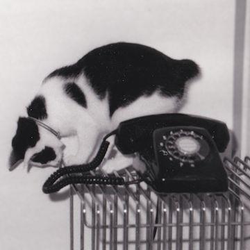 黒電話と白黒猫